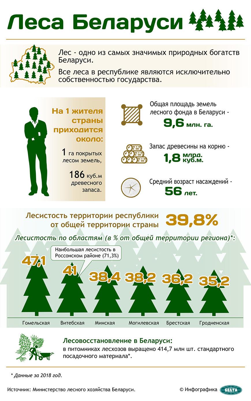 Леса Беларуси
