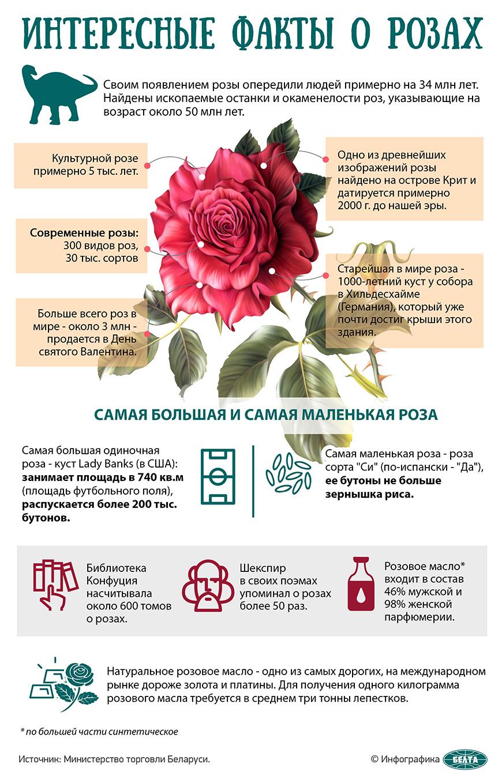 Интересные факты о розах