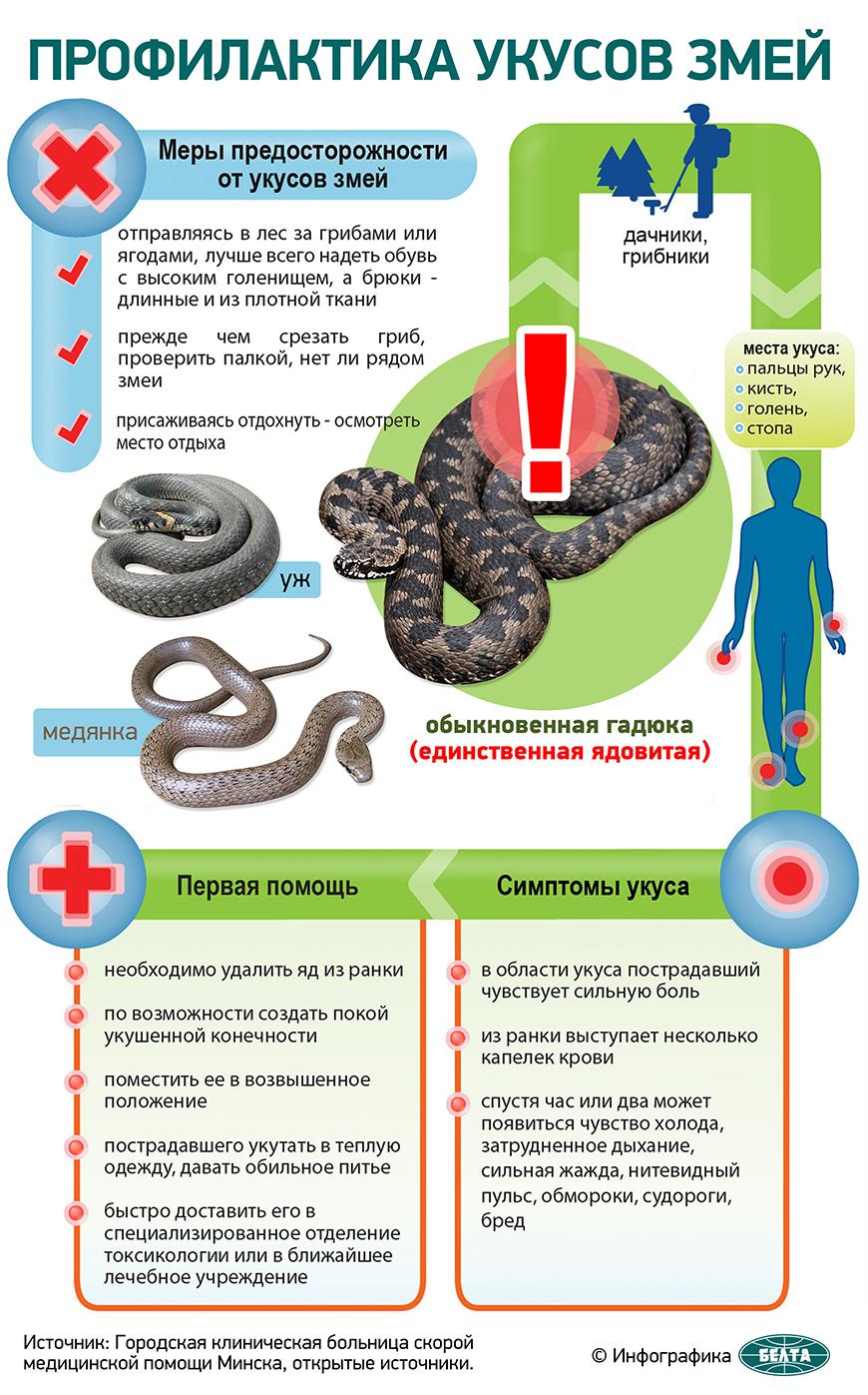 Профилактика укусов змей