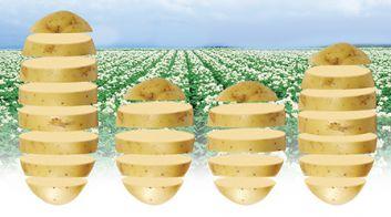 Уборка картофеля в Беларуси
