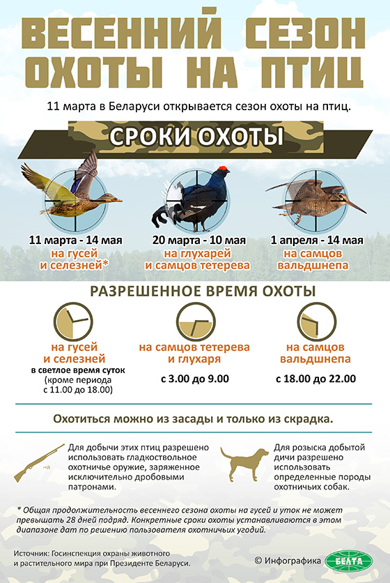 Весенний сезон охоты на птиц