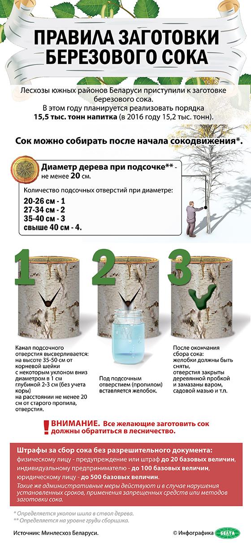 Правила заготовки березового сока