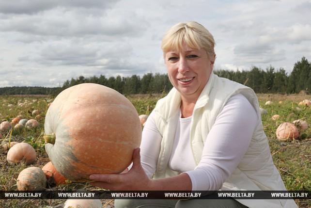 Жительница Быховского района сдала около 80 т кабачков на консервно-овощесушильный завод