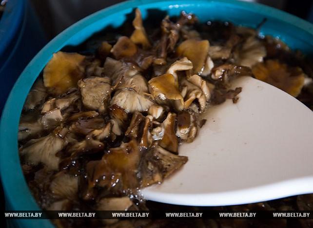 Заготовка грибов ведется организациями Белкоопсоюза Брестской области