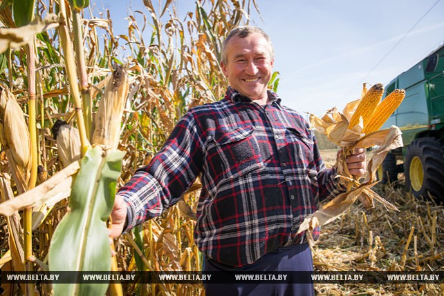 """Около 5 тыс. т зерна кукурузы планируют собрать в ОАО """"Остромечево"""""""