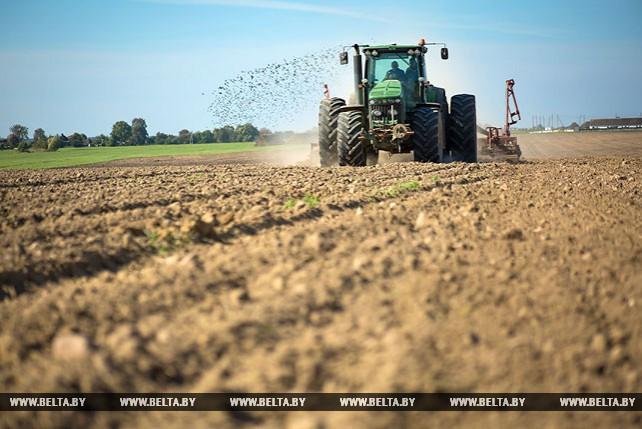 Свыше 180 тыс. га засеяно озимыми зерновыми в Брестской области