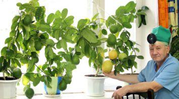 Врач из Мозыря увлекается выращиванием южных фруктов