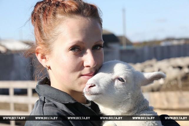 """ОАО """"Комбинат """"Восток"""" Гомельского района седьмой год выращивает овец полутонкорунной породы"""
