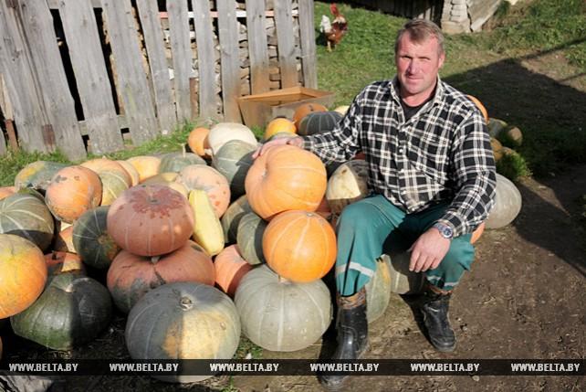 Большой урожай тыкв и кабачков вырастила семья Шевченко из Ушачского района