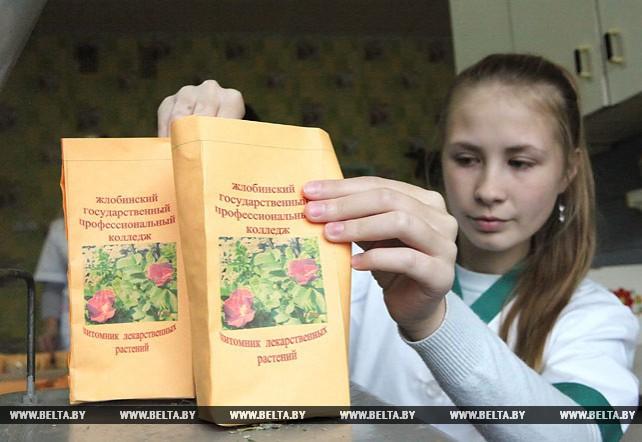 В Жлобинском аграрном колледже выращивают лекарственные, чайные и пряные культуры