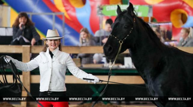 Выставка-шоу породистых лошадей прошла в Минске