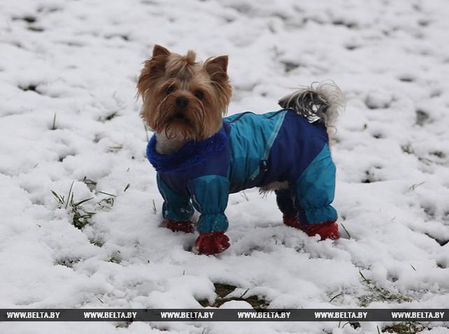 Снег в Витебске