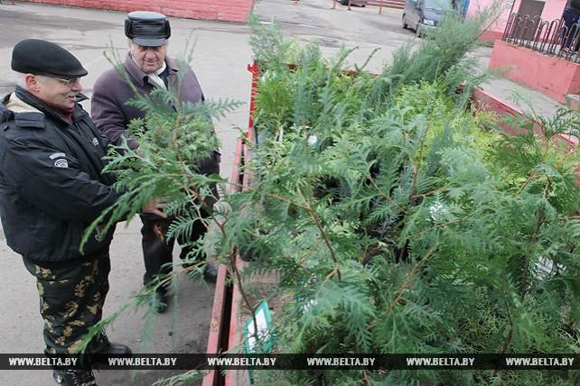 Лесоводы Петриковского лесхоза реализовали этой осенью 1,5 млн сеянцев