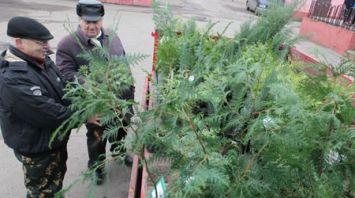 Лесоводы Петриковского лесхоза реализовали этой осенью 1,5 млн сеянцев сосны