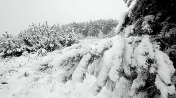 Снежная зима в Беларуси