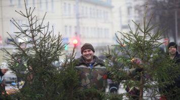 В Гомеле начались елочные новогодние ярмарки