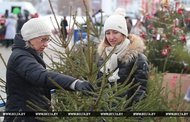 Центральный елочный базар в Минске