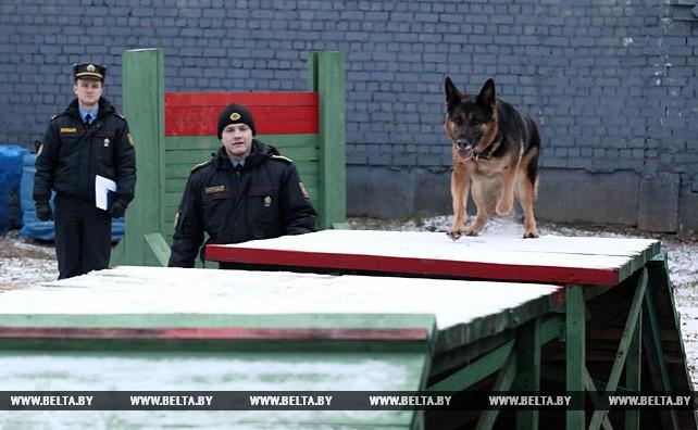 Четыре собаки несут дежурство в Ленинском райотделе Департамента охраны Могилева