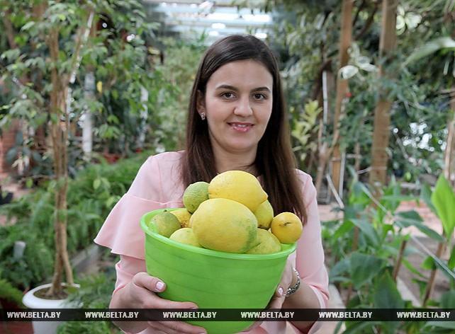 Бананы, цитрусовые и инжир выращивают в Витебской области