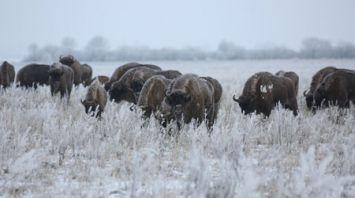 Зима в Налибокской пуще