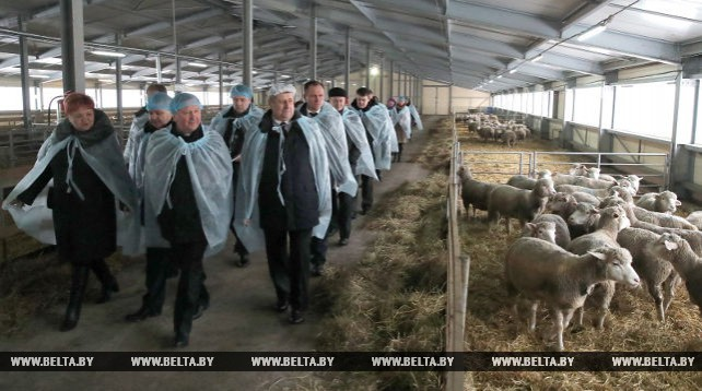 Кобяков ознакомился с развитием овцеводства в Логойском районе