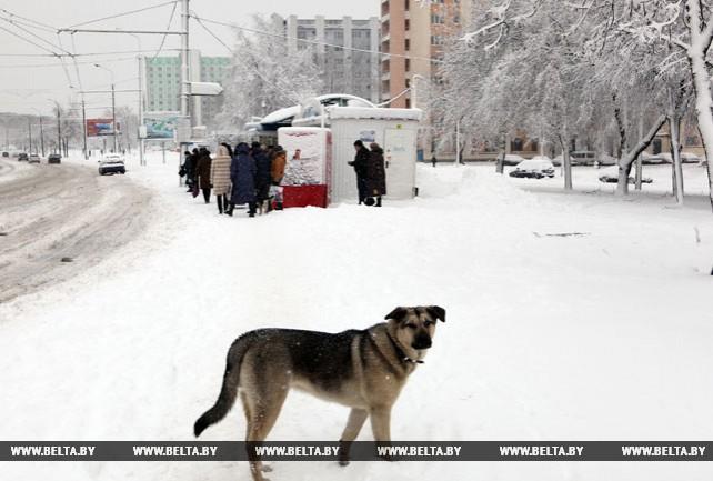 Снег и метель прошли в Гомеле