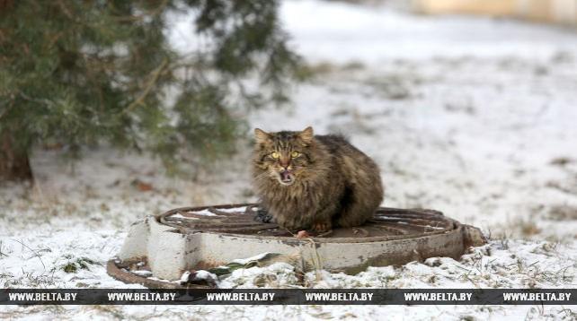 Морозная погода в Минске