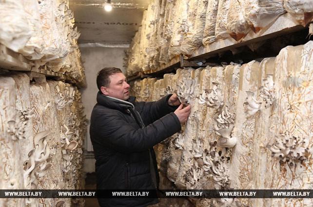 Михаил Яковенко выращивает вешенки на приусадебном участке