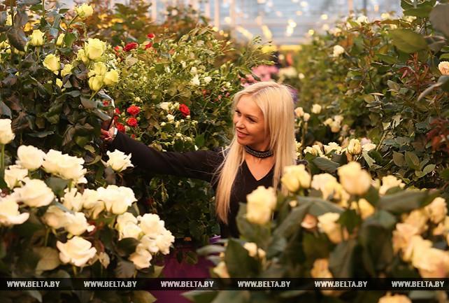 """Около 300 тыс. роз вырастили в тепличном хозяйстве ОАО """"ДорОрс"""" к 8 Марта"""