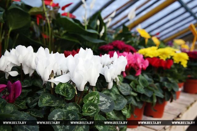 22 тыс. цветов готов продать к 8 марта Могилевзеленстрой