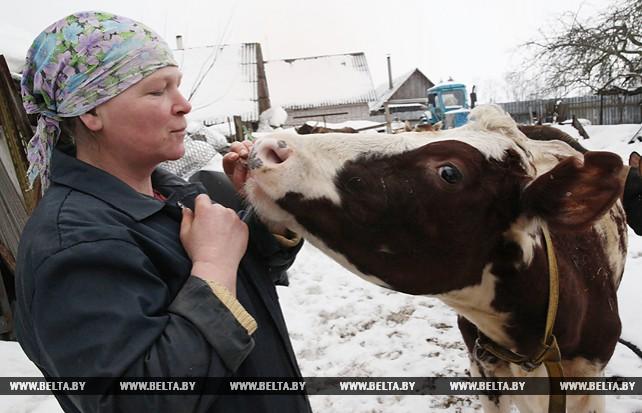 Зоя Багаутдинова - лучшая молокосдатчица района