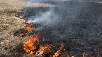 В Гродненской области зафиксированы первые пожары от выжигания сухой растительности