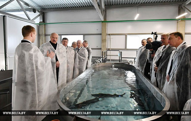 Лукашенко ознакомился с производством в Беларуси черной икры