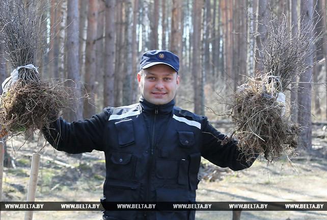 Сотрудники управления ГКСЭ по Гомельской области приняли участие в посадке леса