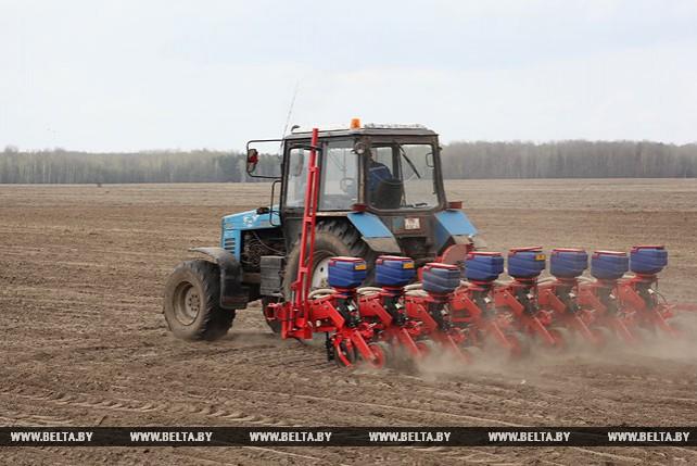 В Гомельской области приступили к севу кукурузы
