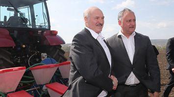 Лукашенко и Додон на тракторах засеяли поле кукурузы под Кишиневом