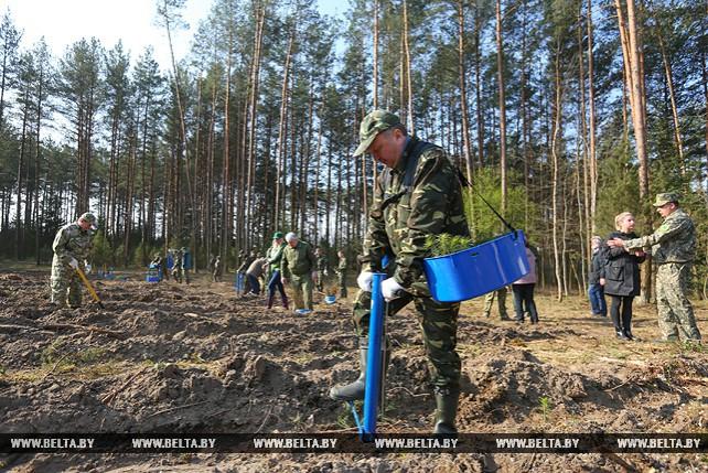 Андрей Кобяков принял участие в посадке леса в Акинчицком лесничестве Столбцовского лесхоза