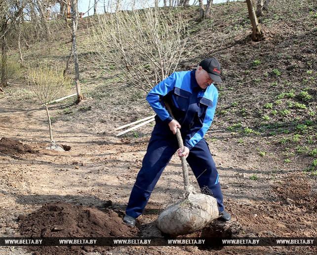 Лукашенко принял участие в субботнике