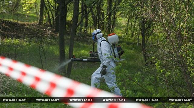 В Беларуси планируется в ближайшие 2 года свести к минимуму популяцию борщевика Сосновского