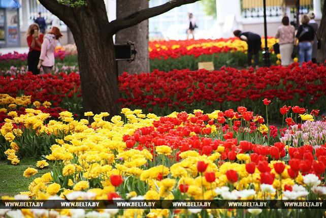 30 тыс. тюльпанов высадили в центральном городском парке Гомеля
