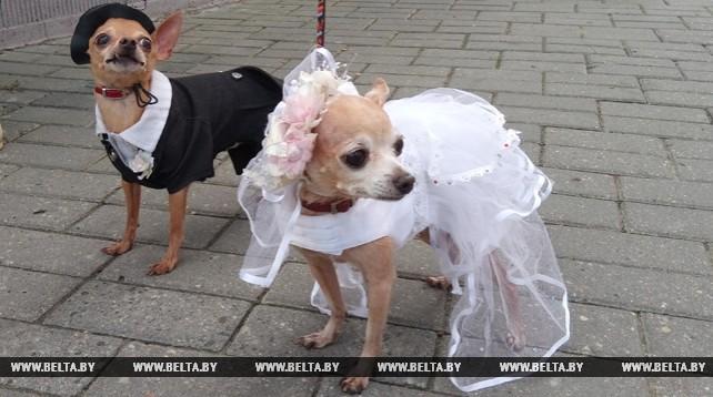 Собаки в свадебных и праздничных костюмах прошлись по Гродно