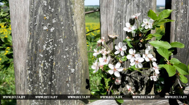 Весна в Молодечненском районе