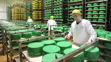 Рогачевский МКК ежемесячно производит до 900 т сыра