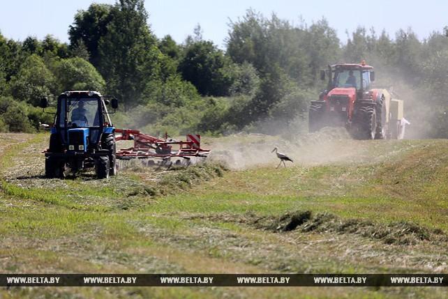 Заготовка кормов идет в Глубокском районе
