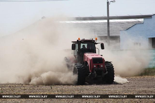 Пересев засохших зерновых идет в Рогачевском районе