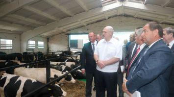 """Лукашенко посетил организации в Шкловском районе, входящие в структуру агрохолдинга """"Купаловское"""""""