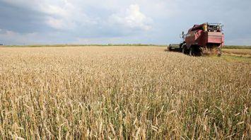 "Комбинат ""Восток"" убирает озимую пшеницу"