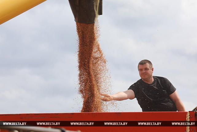 Хлеборобы Витебского района приступили к уборке зерновых