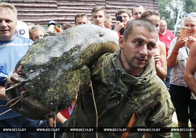 """""""Большая бард-рыбалка"""" идет на рекорд: пойман сом более 40 кг"""