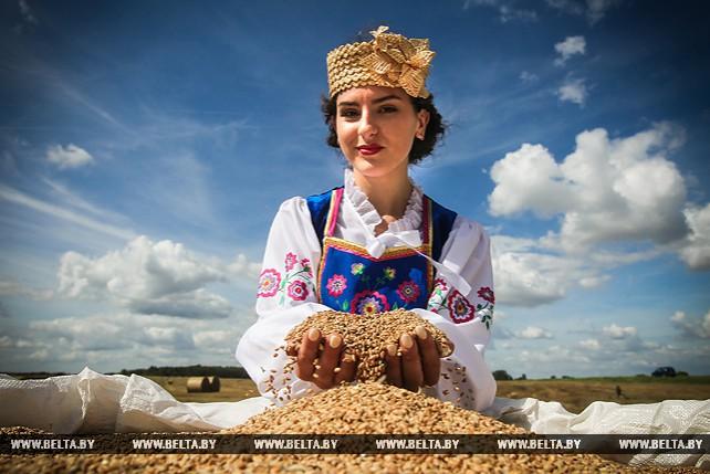 Барановичский район первым в Брестской области намолотил 100 тыс. т зерна